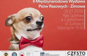 Międzynarodowa Wystawa Psów Rasowych w HSC